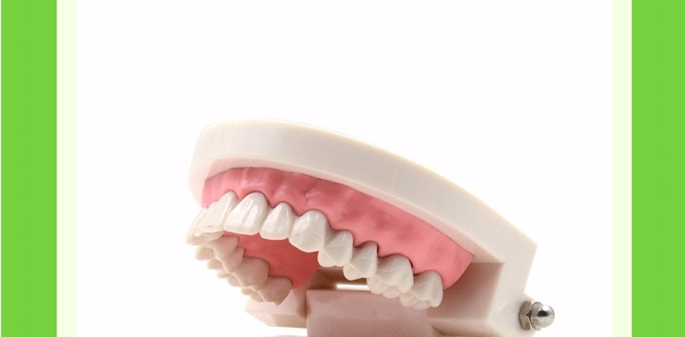 Teeth Model0000002
