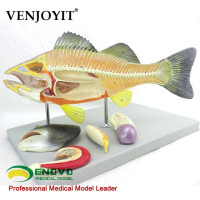 Fish anatomical model aquaculture professional science teaching experiment model biological animal model