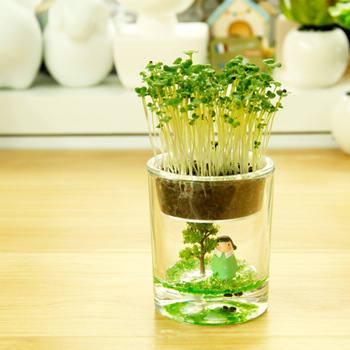 Strange new gift bottle micro landscape ecology science Creative mini plants office plants pots fairy Cup