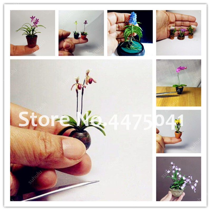 20pcs Mini Orchid flowers for rooms perennial flowers for home and garden