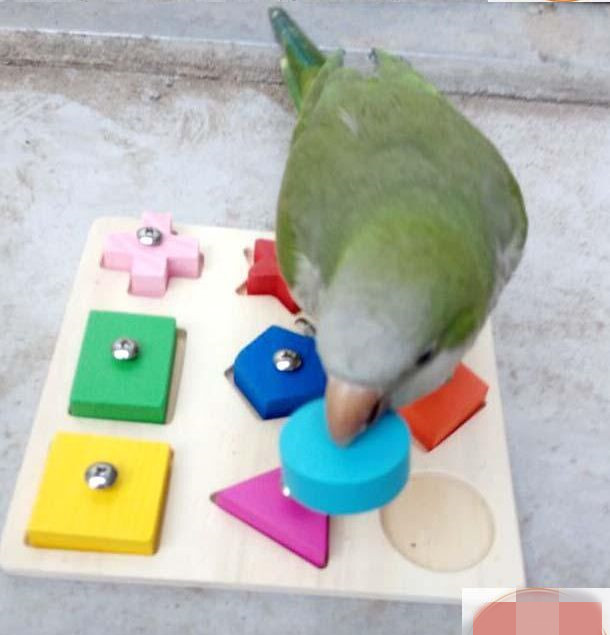 Discount Bird Toys : Popular wooden bird toys buy cheap lots