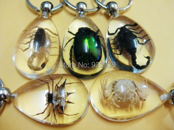 Free Shipping 5 PCS High Quality ice drop jewelry mix real scorpion&spider&crab&beetle keychain Wealth TAXIDERMY GIFT