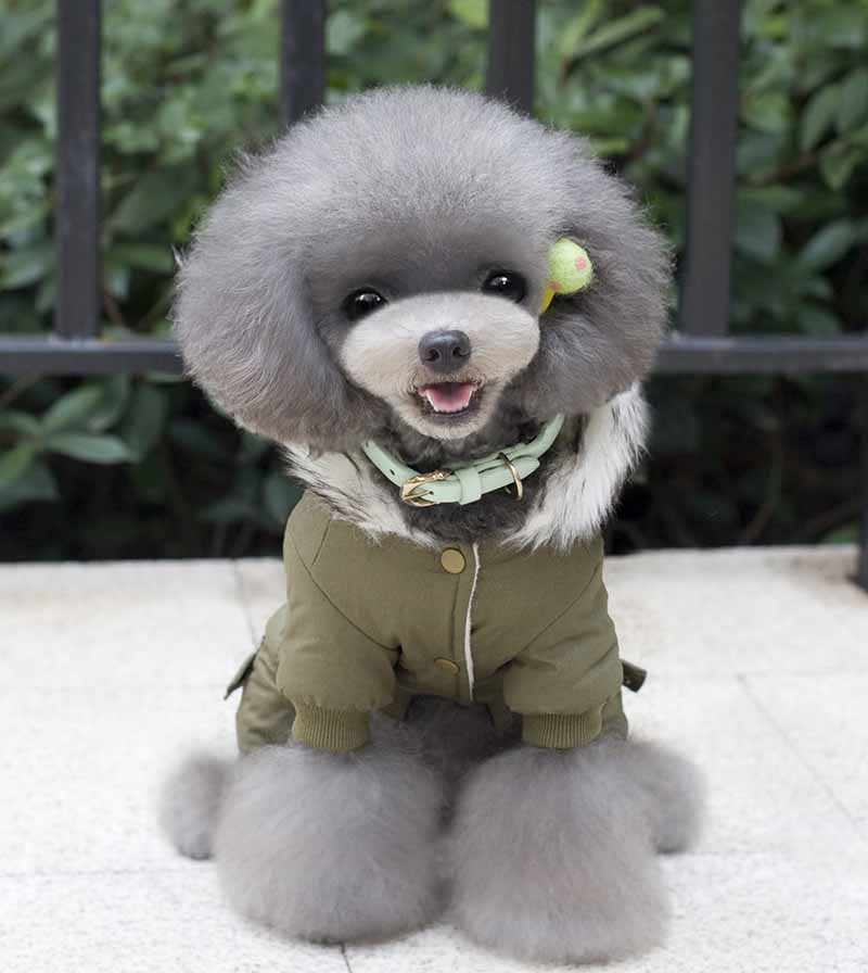 New Fashion Pet Dog Costume Pet Winter Parkas Clothes for Small Dogs Khaki Green Chihuahua Yorkies Jumpsuit Apparel S M L XL XXL5