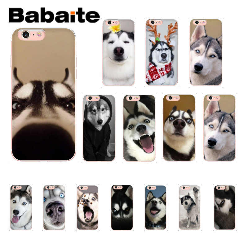 Babaite Funny cute husky with a hat Luxur Customer Phone Case for iPhone 8 7 6 6S Plus X XS MAX 5 5S SE XR 11 11pro 11promax