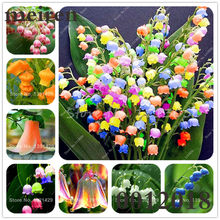 Hot Sale 100 Pcs/Bag Bell Orchid Bonsai Flower Campanula Bonsai Flower Seedling Convallaria Plant Pot For Home Garden air plants(China)