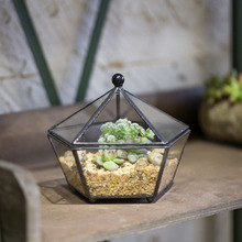 Small Modern Artistic Clear Jewel boxed Pentagon Shape Glass Geometric Terrarium Plant Succulent Planter Box Moss
