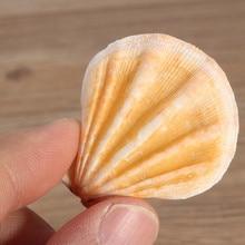 Exquisite Decorative Organic Mediterranean Seashells