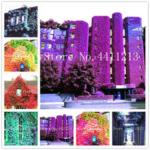 New Arrival 200 Pcs Creepers Green boston ivy Bonsai Green Leaf Flowers Plant Wall Floral Vine lvy plant grass Anti-radiation(China)