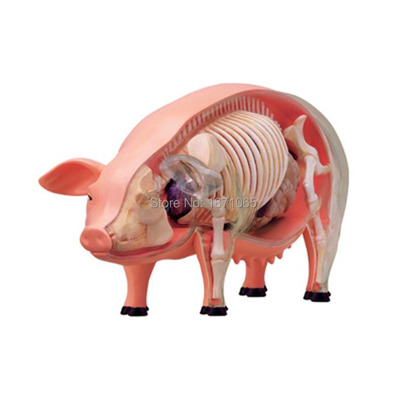 Anime 3D 4D Vison Pferd Schwein Kuh Anatomie Medizinische Anatomische Tier Modell Puzzels Für Kinder Skelett Erziehungswissenschaft Spielzeug in ...