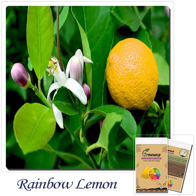 Buy rare rainbow lemon seeds organic for Can i grow a lemon tree from lemon seeds
