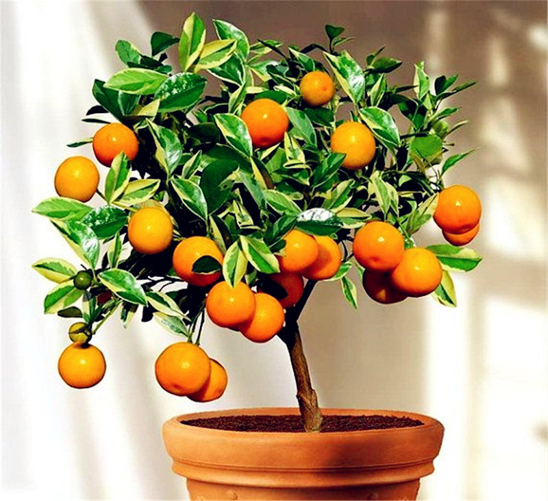 top 10 largest large tropical fruit ideas and get free