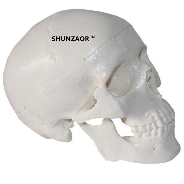 Мини-череп человека анатомические Анатомия головы Спецодежда медицинская модель удобно картина модель изучения анатомии учебные принадле... ...