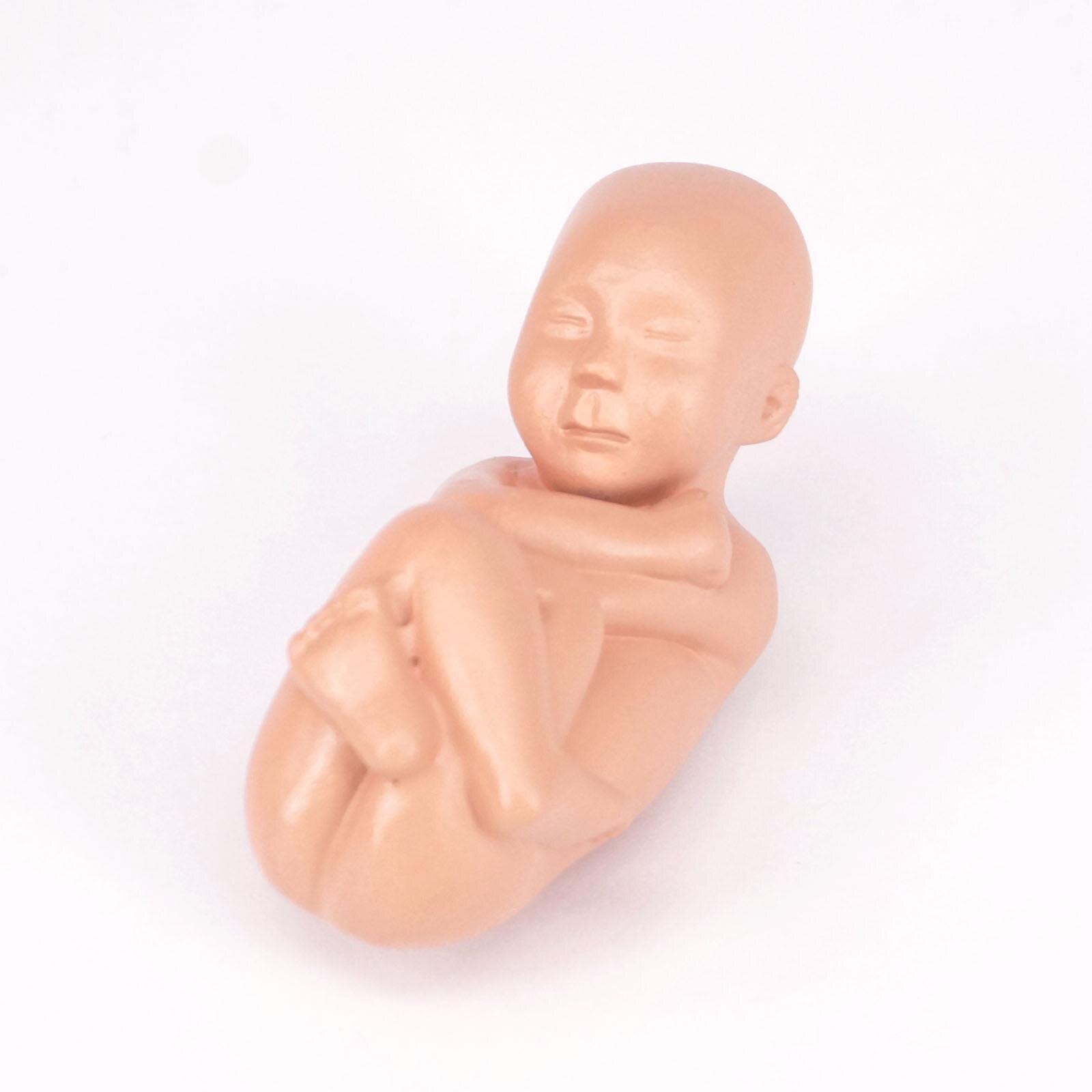 Menschlichen Weibliche Becken Abschnitt Schwangerschaft Anatomisches ...