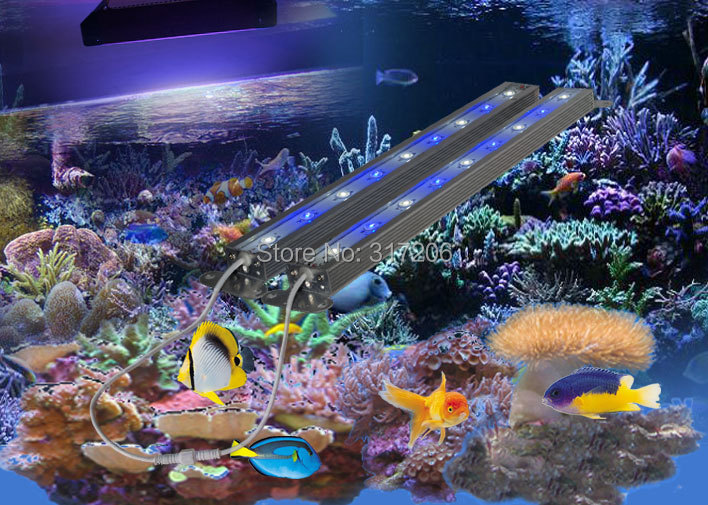 Popular Live Coral Reef Buy Cheap Live Coral Reef Lots