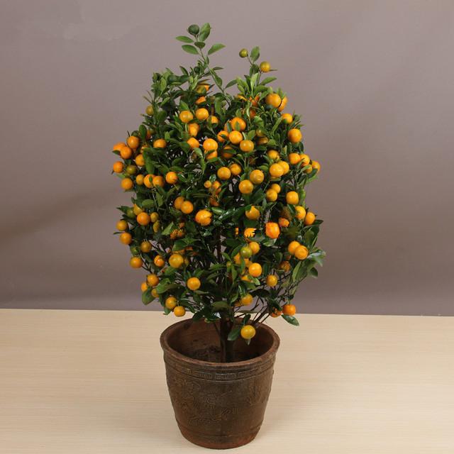 Bonsai Orange Tree Seeds, 20pcs/pack