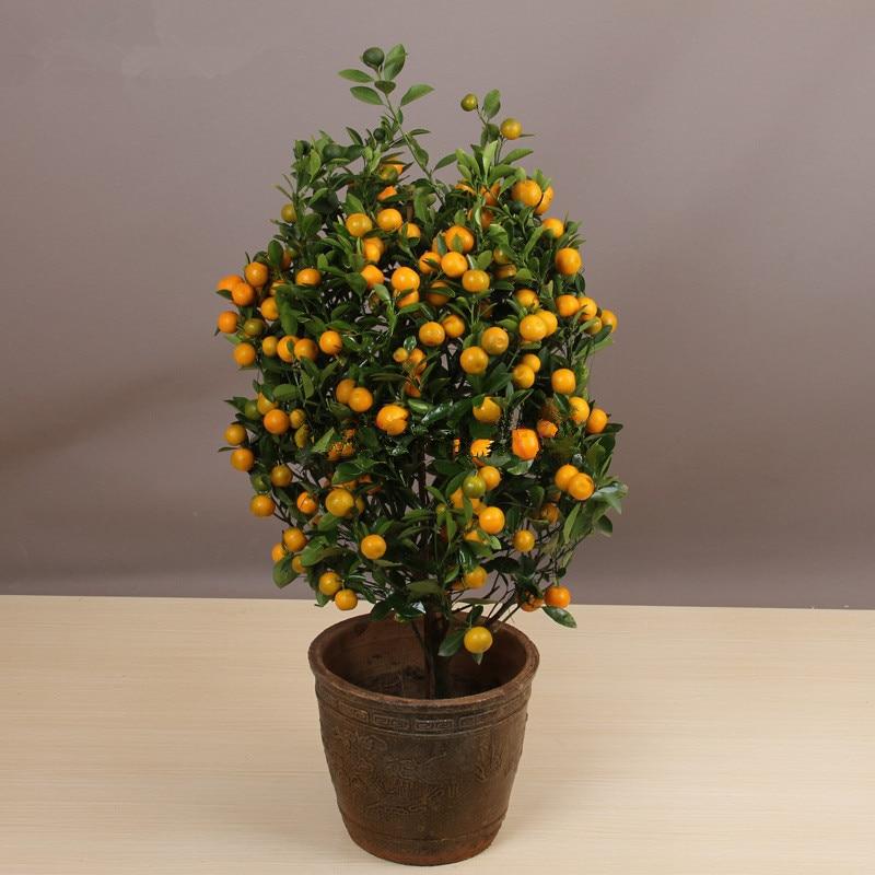 20pcs Edible Fruit Mandarin Indoor Bonsai Tree Seeds Citrus Bonsai Mandarin Orange Seeds