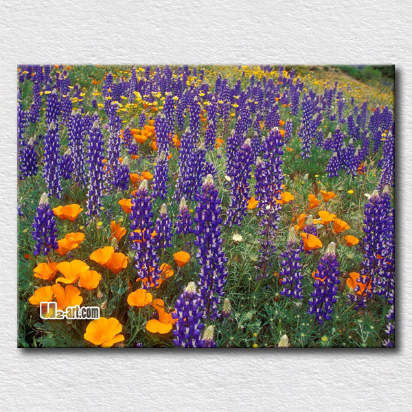 Flower field oil painting reproduction canvas flower prints purple flowers hang in the bedroom for fresh you heart