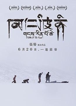 《冈仁波齐》2015年中国大陆剧情电影在线观看