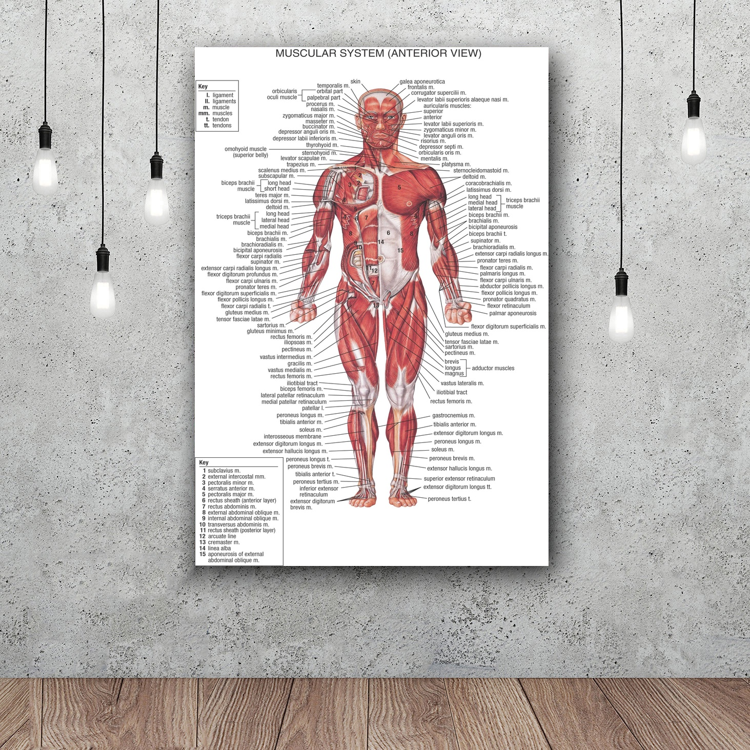 Human Body Anatomical Chart Muscular Art Silk Fabric Poster Print ...
