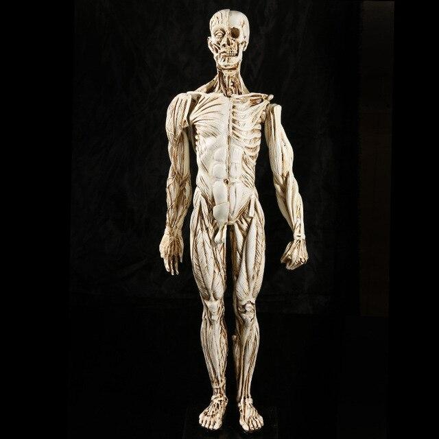 Medical Muscle Man Human Anatomy Study Teaching Skull Specimen Resin