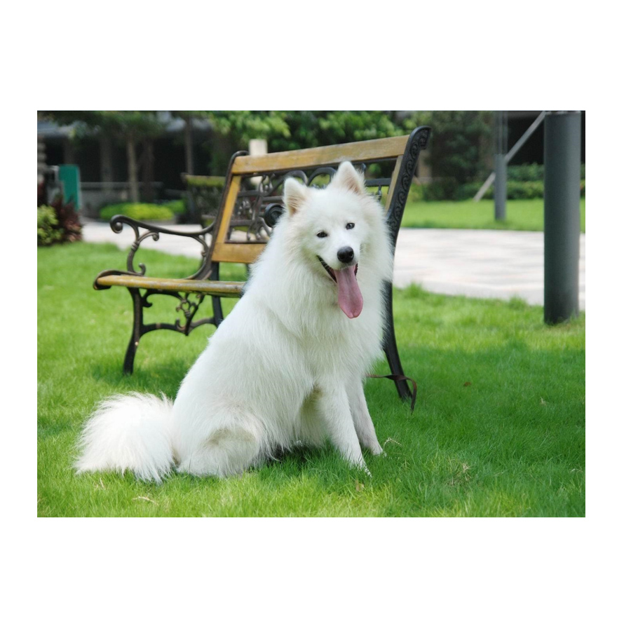 US $6 88 42% OFF|Diamond painting Samoyed dog cross stitch kit 3D Diy  diamond embroidery sale diamond mosaic pattern home decor kids gift-in  Diamond