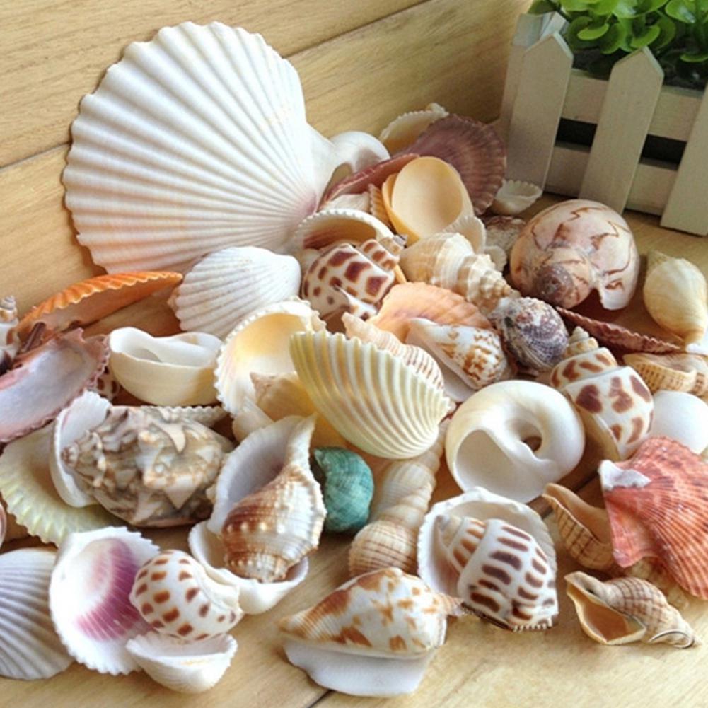 TPFOCUS Natural Mixed Sea Shells For Aquarium Microlandschaft Decor Props