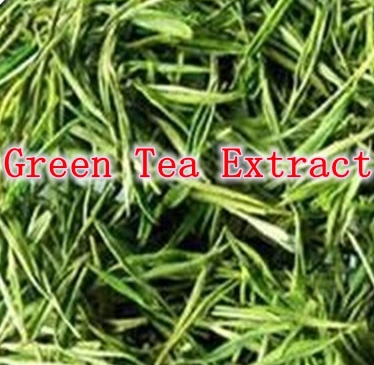 2000 Counts x Green Tea Extract 80% Tea Polyphenols 400mg Powerful Antioxidant free shipping 4oz 110g jasmine pearl tea fragrance green tea a2clz01 free shipping