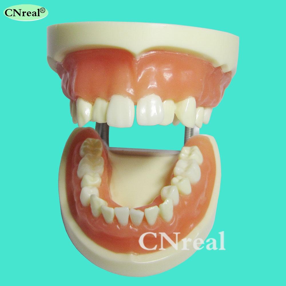 1 piece Dental Teeth Extraction Training Model with Silicone Soft Gum1 piece Dental Teeth Extraction Training Model with Silicone Soft Gum