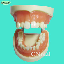 цена на 1 piece Dental Teeth Extraction Training Model with Silicone Soft Gum