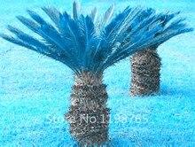 100pcs Blue Cycas Sago Palm Bonsai Tree Seeds