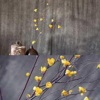 1 Pieces Wintersweet With Branch Natural Dried Plant Handmade Dried Flower Home Decoration Flower Arrangement Material
