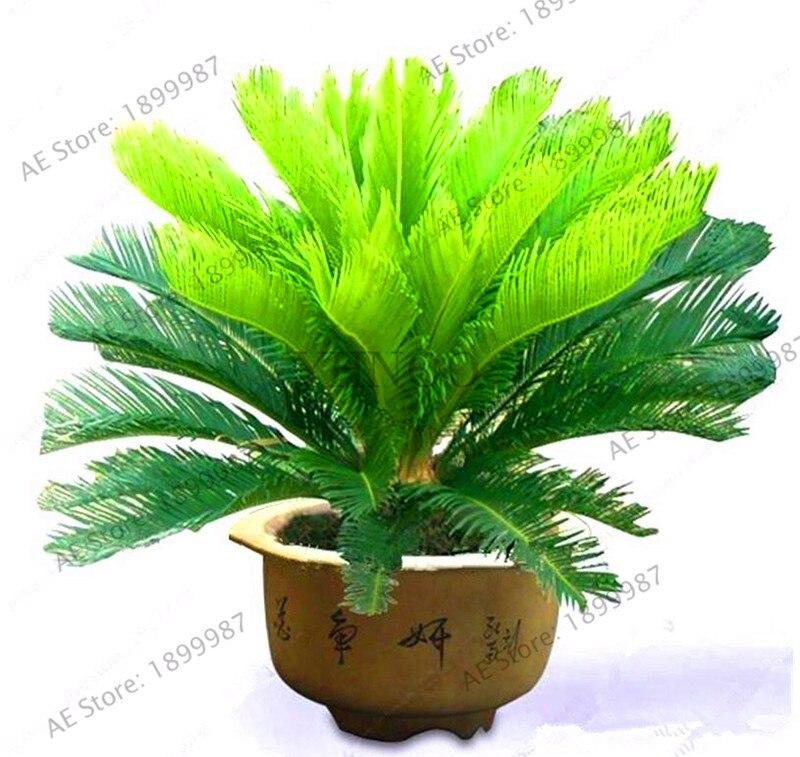 Angled Edition Palm Tree Tropical Island Cufflinks