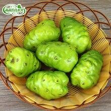 Foam model fake noni juice fruit and vegetable decoration props 200g lot best quality noni fruit powder 100