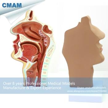 12510 / Human E.N.T. System Diseased Nasal Cavity Anatomy Model,  Medical Science Educational Anatomical Models