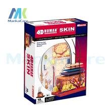 4D мастер-модель человеческой кожи и волос органов Сборка игрушки 19 деталей кожи раздел анатомии медицинского человеческое тело скелет