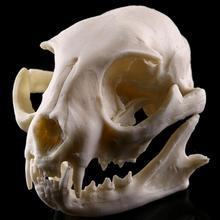 Смола кошка череп модель школы спецодежда медицинская наука развивающие принадлежности Череп Форма Скелет дети подарки игрушечные лошадки