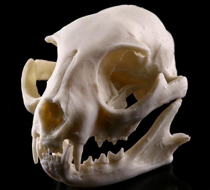 resin Cat skull model  School Medical Science Educational Supplies Skull Skeleton Mold Kids Gifts Toys Halloween Decoration|Medical Science| |  - title=