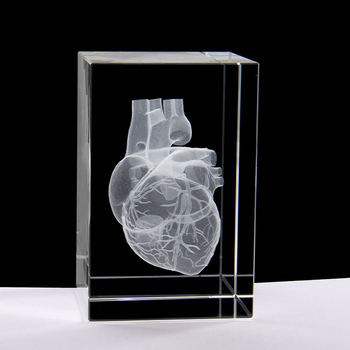 3D stereoscopic crystal inner carving human heart anatomy model 50*50*80mm