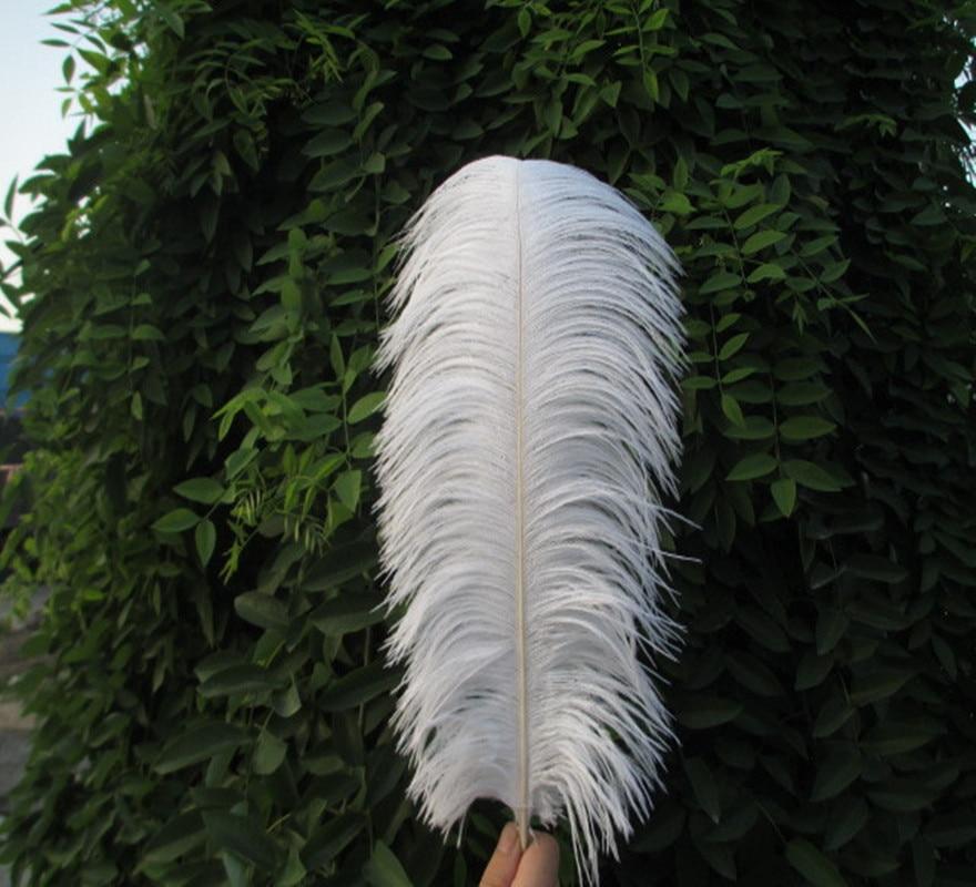 картинки длинные перья целом совковый