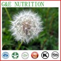 Top Quality Dandelion Extract Powder