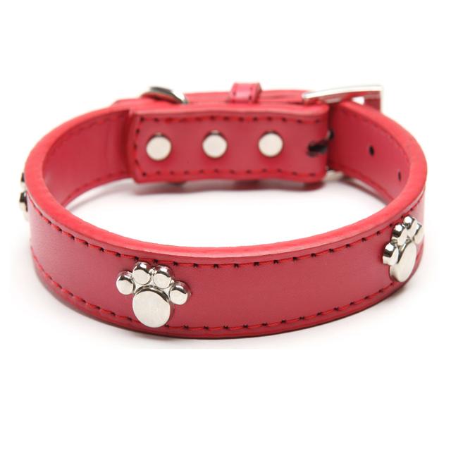 Puppy's Collar
