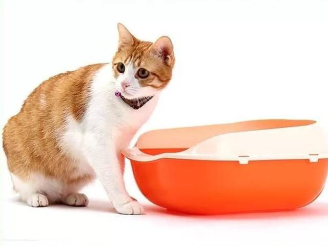 Bright and Colorful Plastic Cat Litter Box
