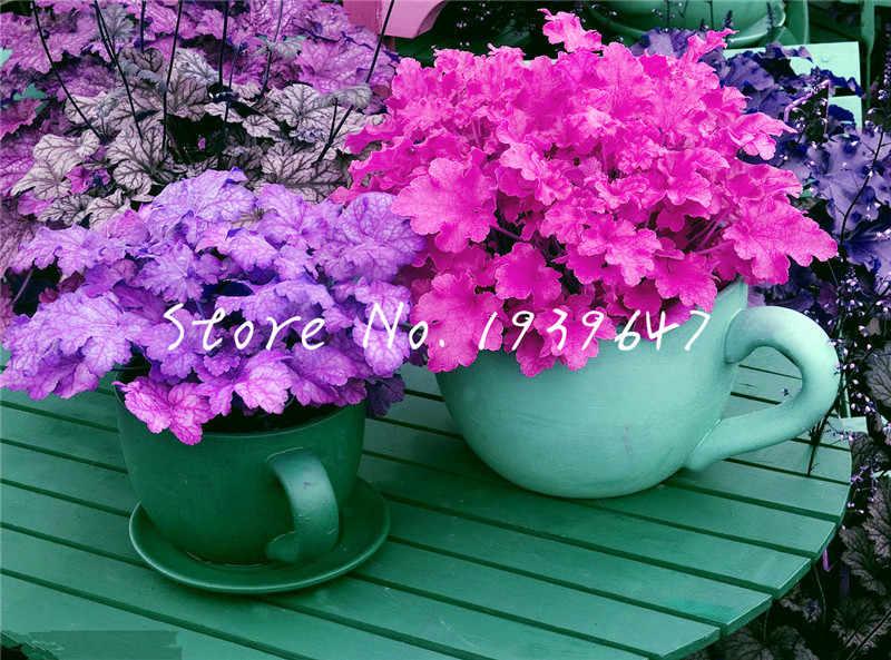 100 قطعة Heuchera micrantha بونساي أوراق الشجر الغريبة الزهور أصائص زرع الباردة متسامح ل ديكور حديقة المنزل fiores