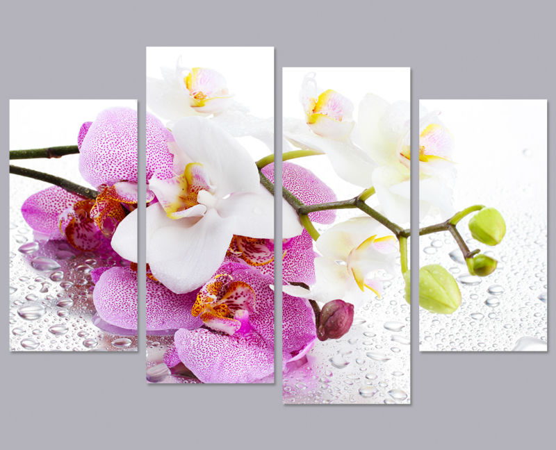 4 Panel Printed painting Pink Phalaenopsis butterfly orchid flower ...