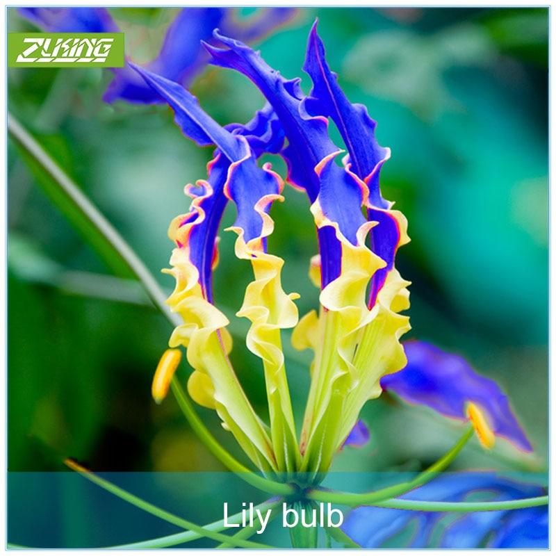 ZLKING 1 шт. голубое пламя лилии лампы карликовые деревья экзотические цветущие растения быстрорастущие многолетний цветник уникальные краси...