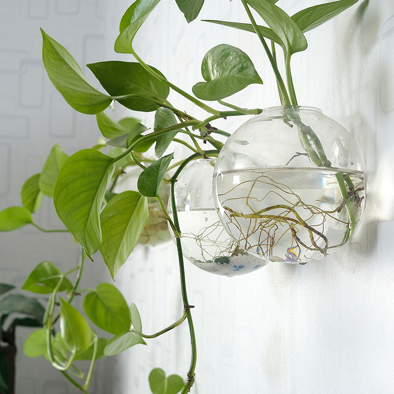 Set Of 6 Glass Planters Wall Hanging Planters Hanging Air Plant Pots