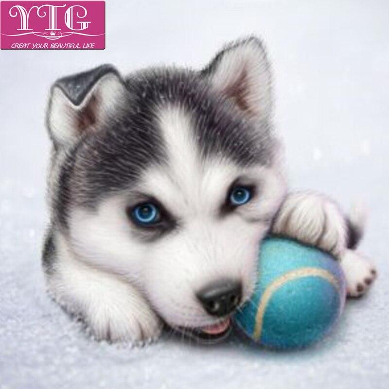 لوحة الماس ، كلب لطيف ، عبر الابره ، - الفنون والحرف والخياطة