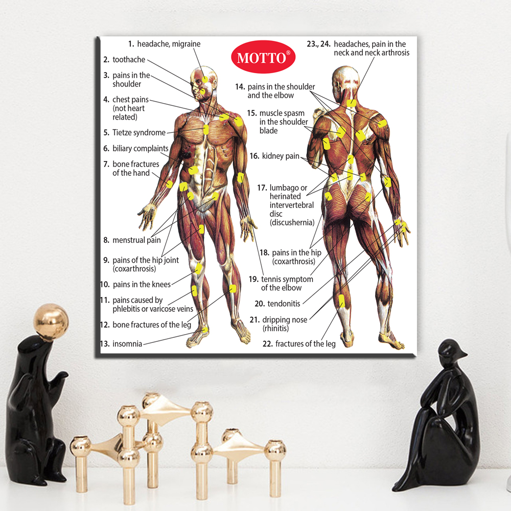 ZZ1854 Human Body Anatomy Canvas Art Print Painting Poster Wall ...