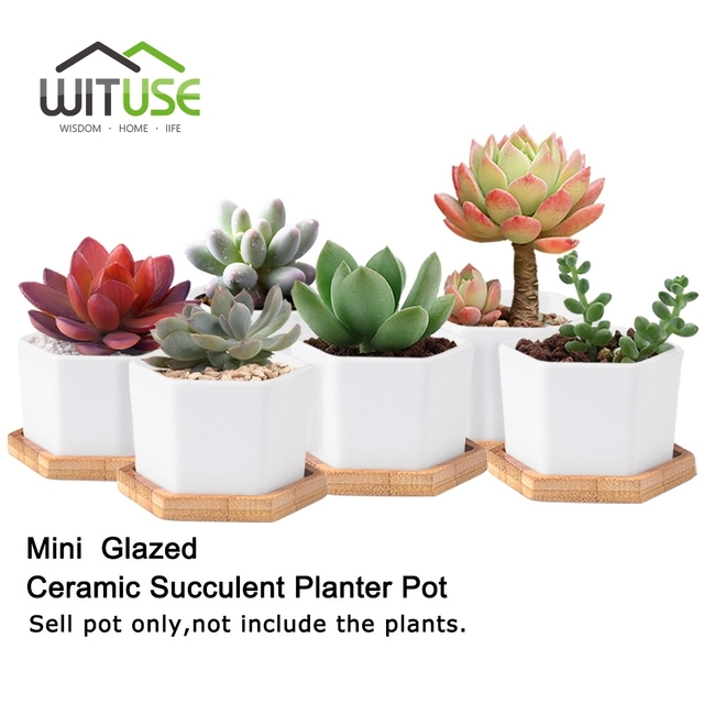 WITUSE Glazed Geometry White Ceramic Succulent Plant Pot Bonsai Planter Desktop Porcelain Flower Pot Home Decor(1 Pot + 1 Stand)  sc 1 st  AliExpress & WITUSE Glazed Geometry White Ceramic Succulent Plant Pot Bonsai ...
