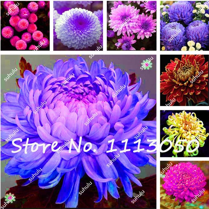 coloré plantes d'intérieur promotion-achetez des